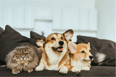 cat and two dogs on couch